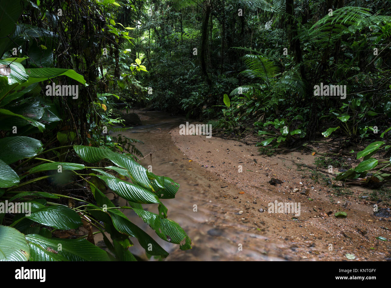 A small stream in the Atlantic Rainforest of SE Brazil - Stock Image