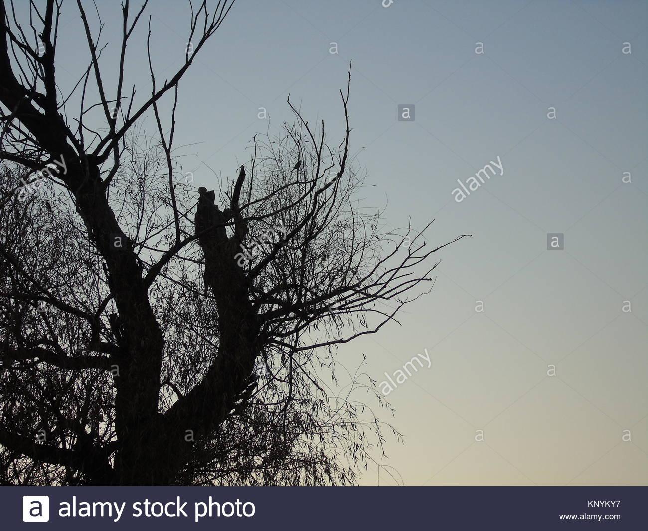 A poetic winter - Stock Image
