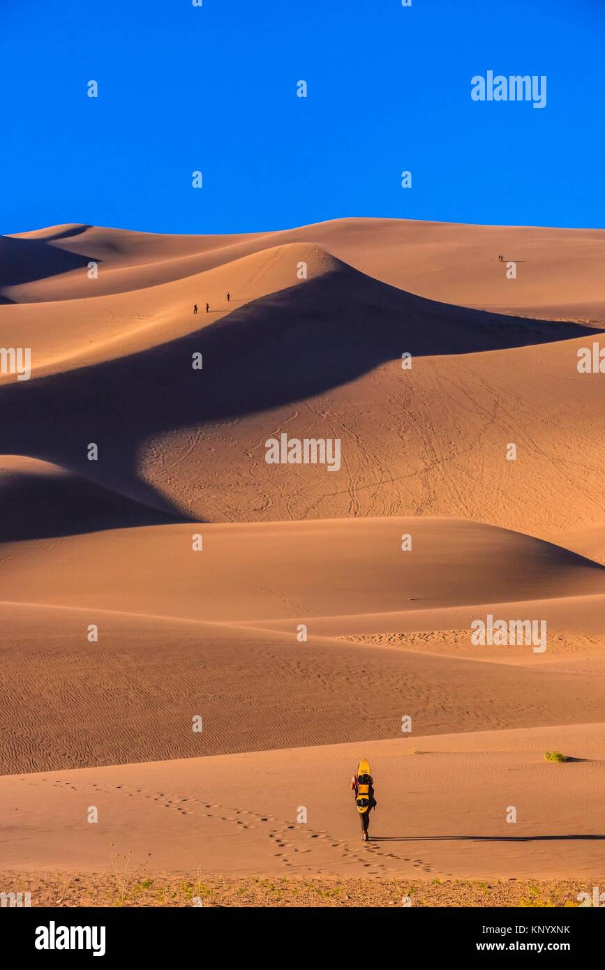 Sandboarder walking up dunes, Great Sand Dunes National Park and Preserve, near Mosca, Colorado USA. The park contains - Stock Image