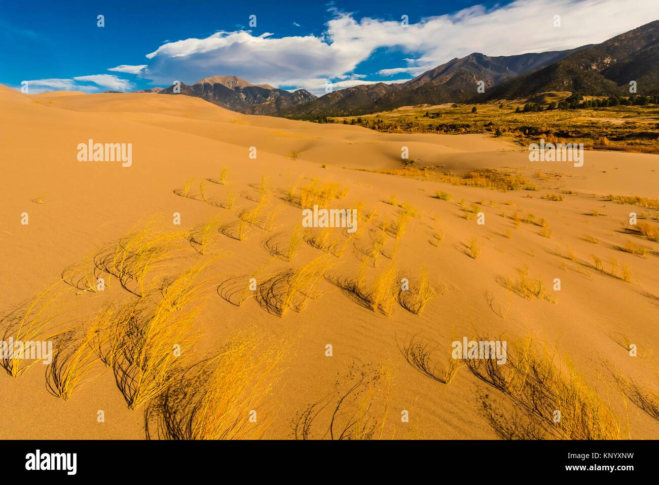 The Great Sand Dunes with the Sangre de Cristo Mountains behind, Great Sand Dunes National Park and Preserve, near - Stock Image