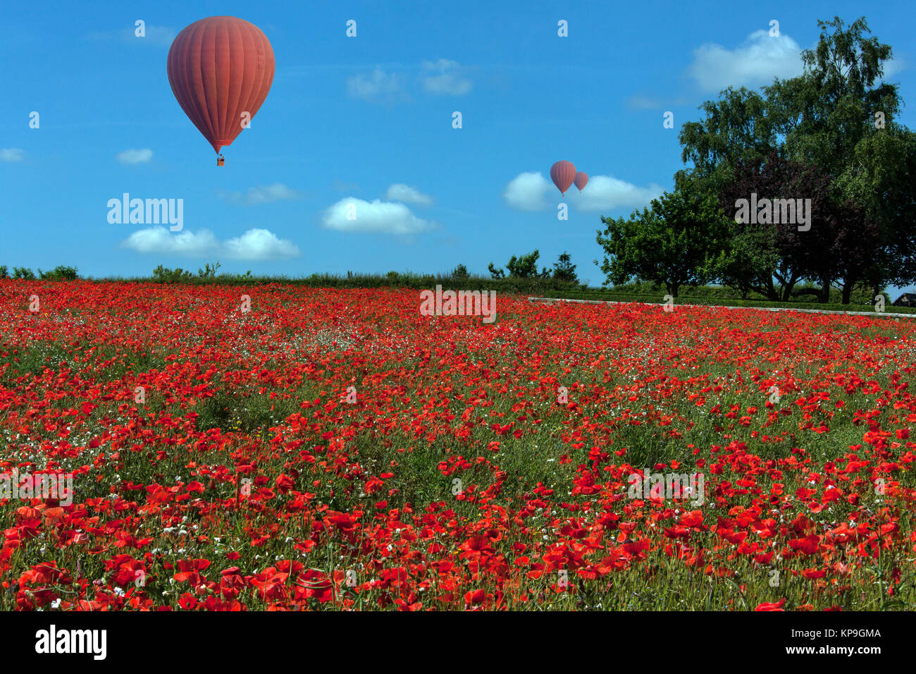 Hot air ballons drifting over a colorful field of poppies in the Yorkshire countryside in northeast England. - Stock Image