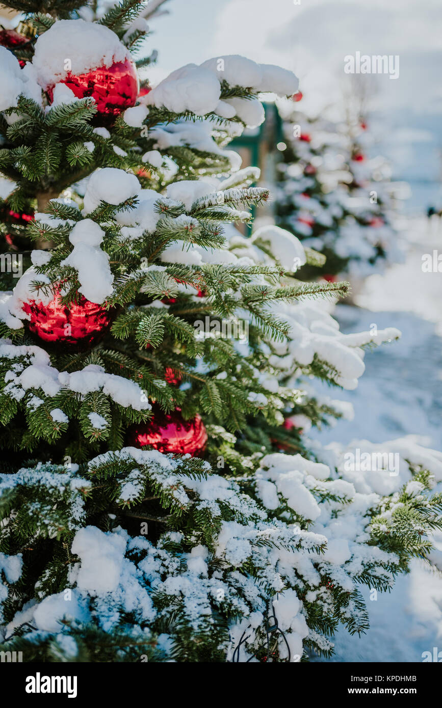 Christmas trees with red balls under snow - Stock Image