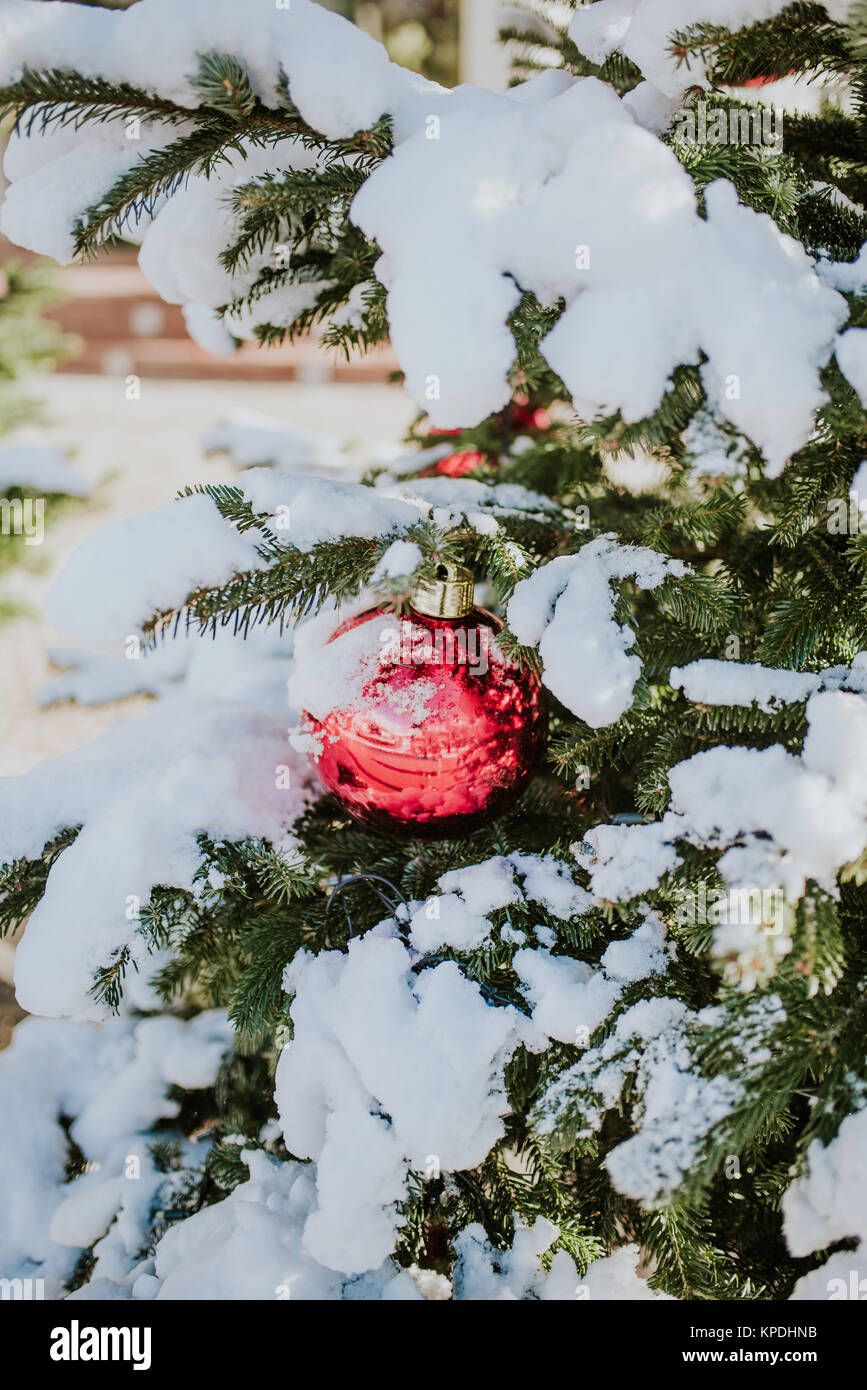 Red christmas ball on a snow-covered tree branch - Stock Image