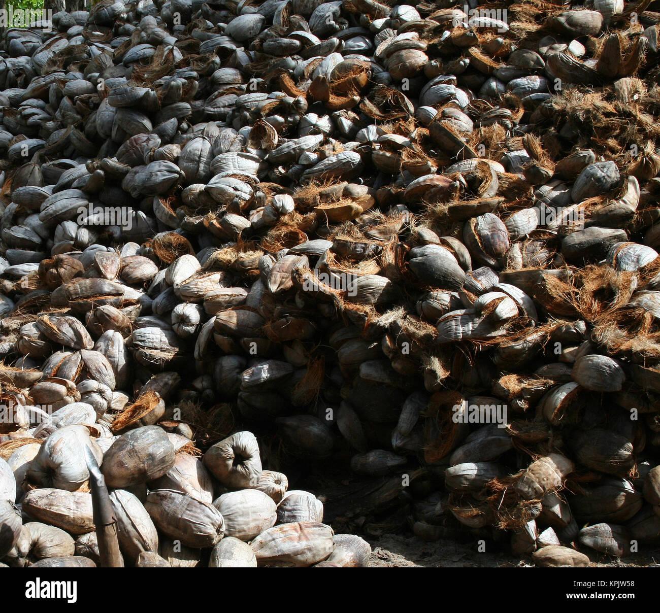 Ashtamudi Lake: Coconut Fibres Stock Photos & Coconut Fibres Stock Images