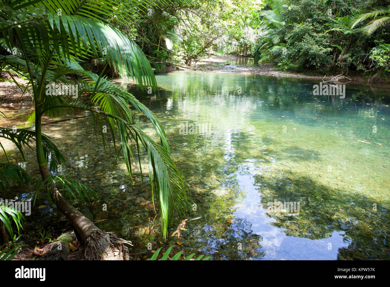 Daintree rainforest australia stock photos daintree for Diwan queensland