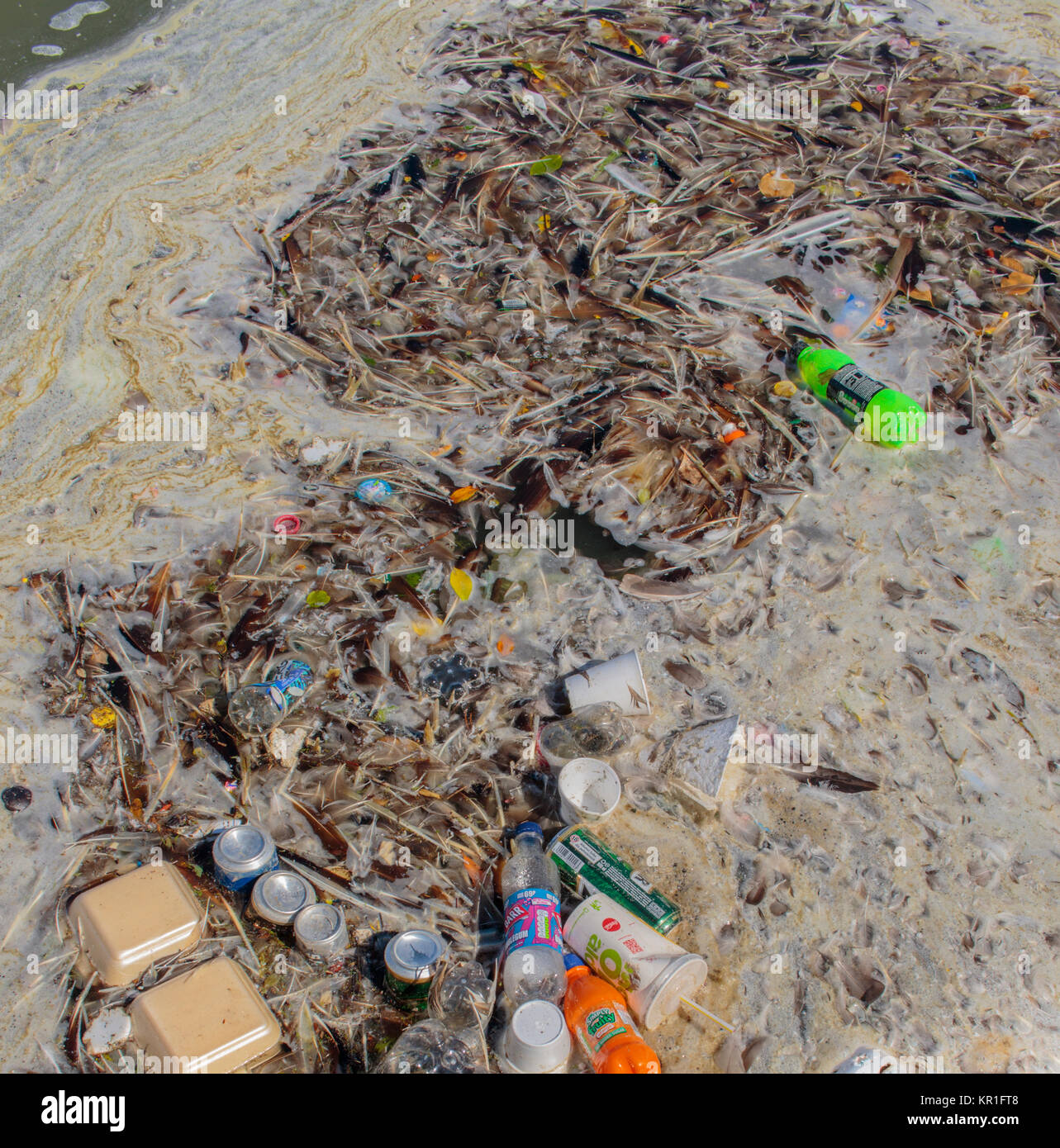 in the rubbish tin Agree or disagree question -in the rubbish tin kia ora koutou o tauawhi, ive moved our blog on to blogger cause i couldn't figure out how to set it up properly so we will give this one a go you all need to use your real names so i can comment back to you on what you have said ok.