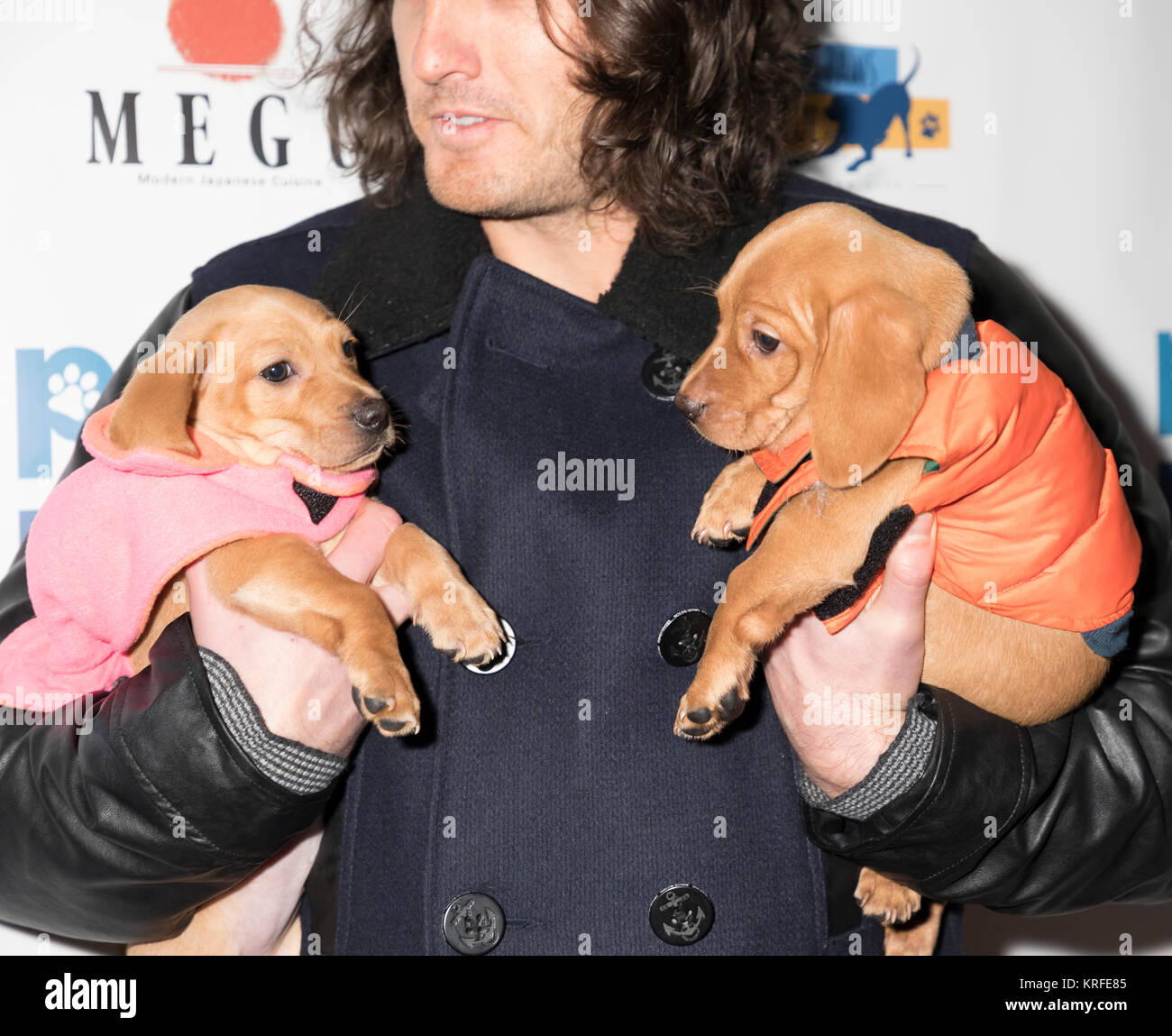 New York, NY, USA - December 19: Andrew Jenks with adoptable dogs attends Paw Prints 1st Annual Paw-liday party - Stock Image