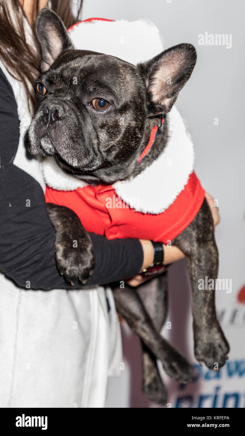 New York, NY, USA - December 19: Royce at the Paw Prints 1st Annual Paw-liday party screening of 'Best in Show' - Stock Image