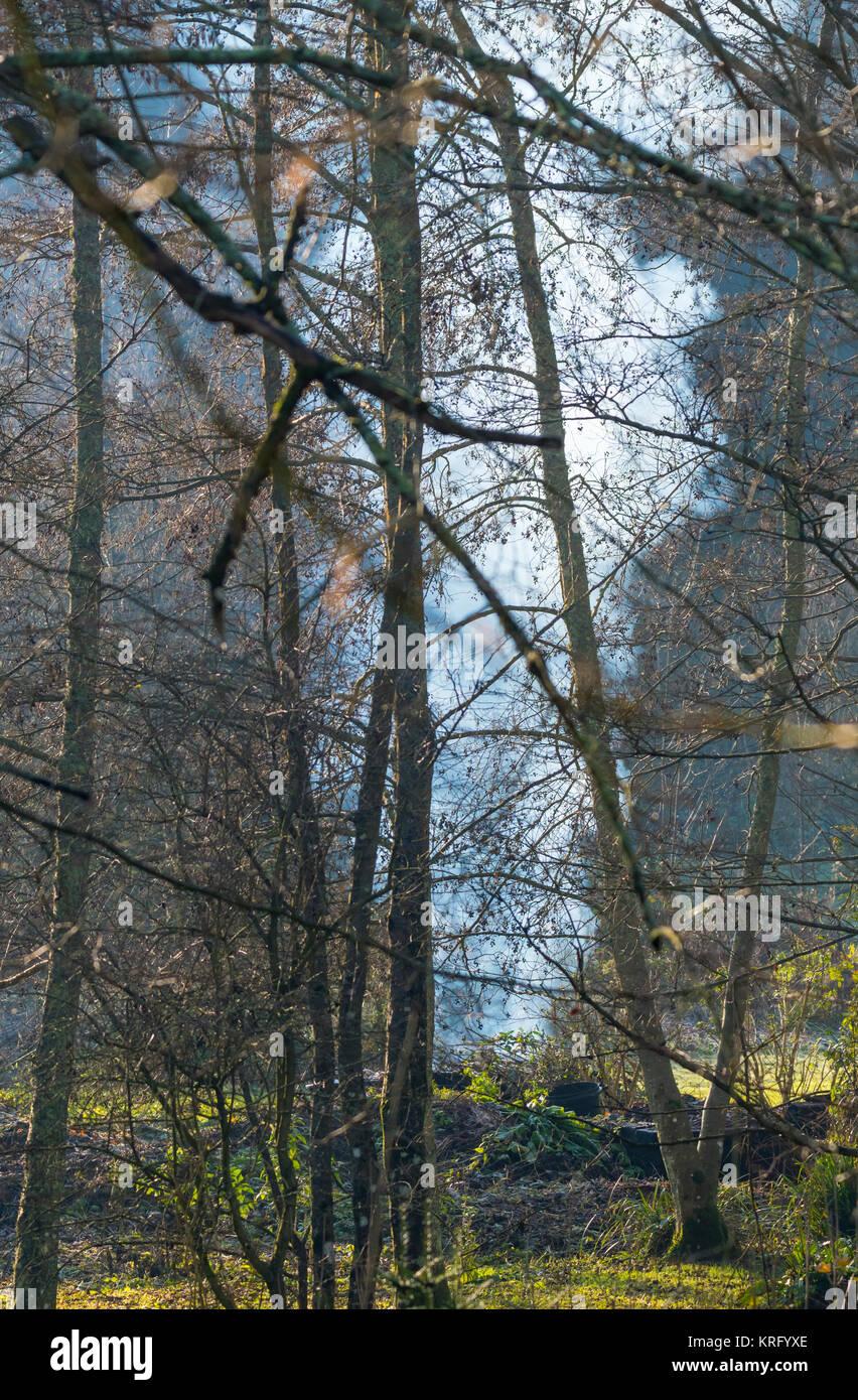 Bonfire burning in woodland in Winter in England, UK. - Stock Image