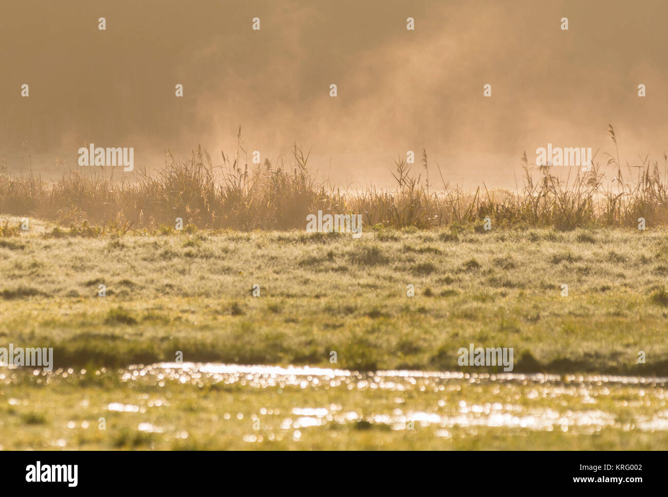 Mist rising from melting frost in a field as the morning sun warms grass, in Winter in the UK. - Stock Image