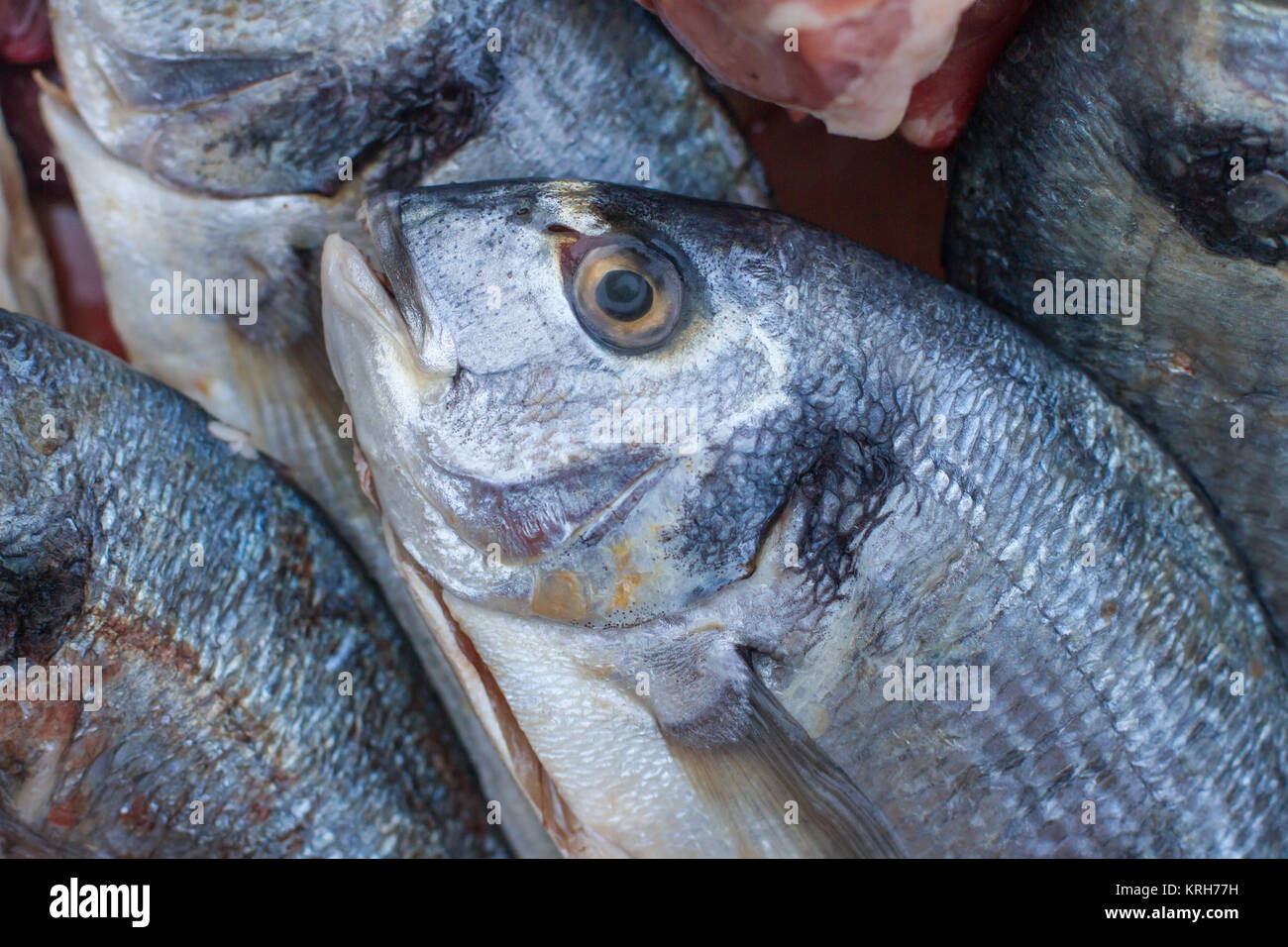 Poultry and fish stock photos poultry and fish stock for Raw fish for dogs