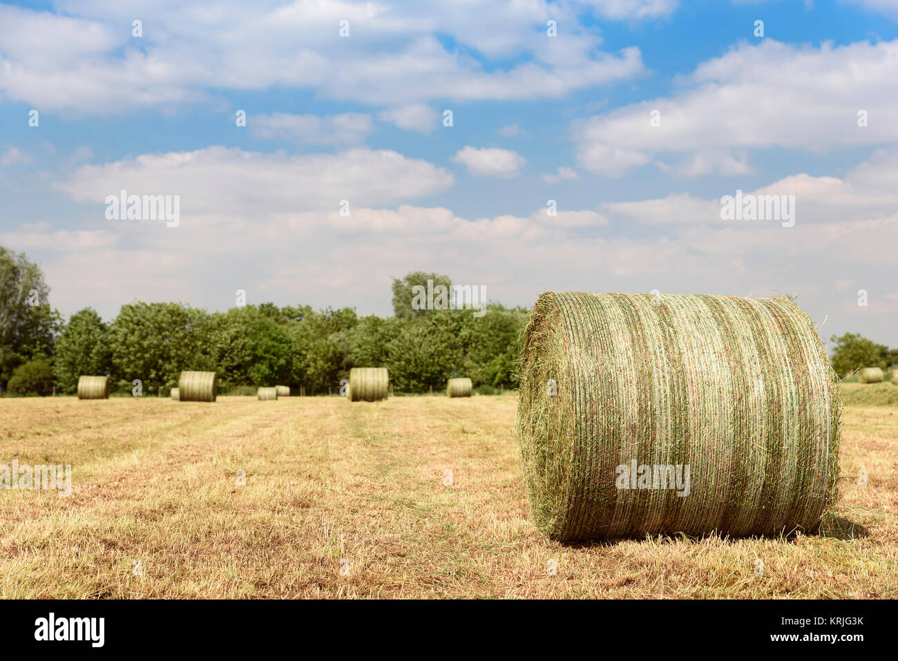 Bales of hay in field - Stock Image