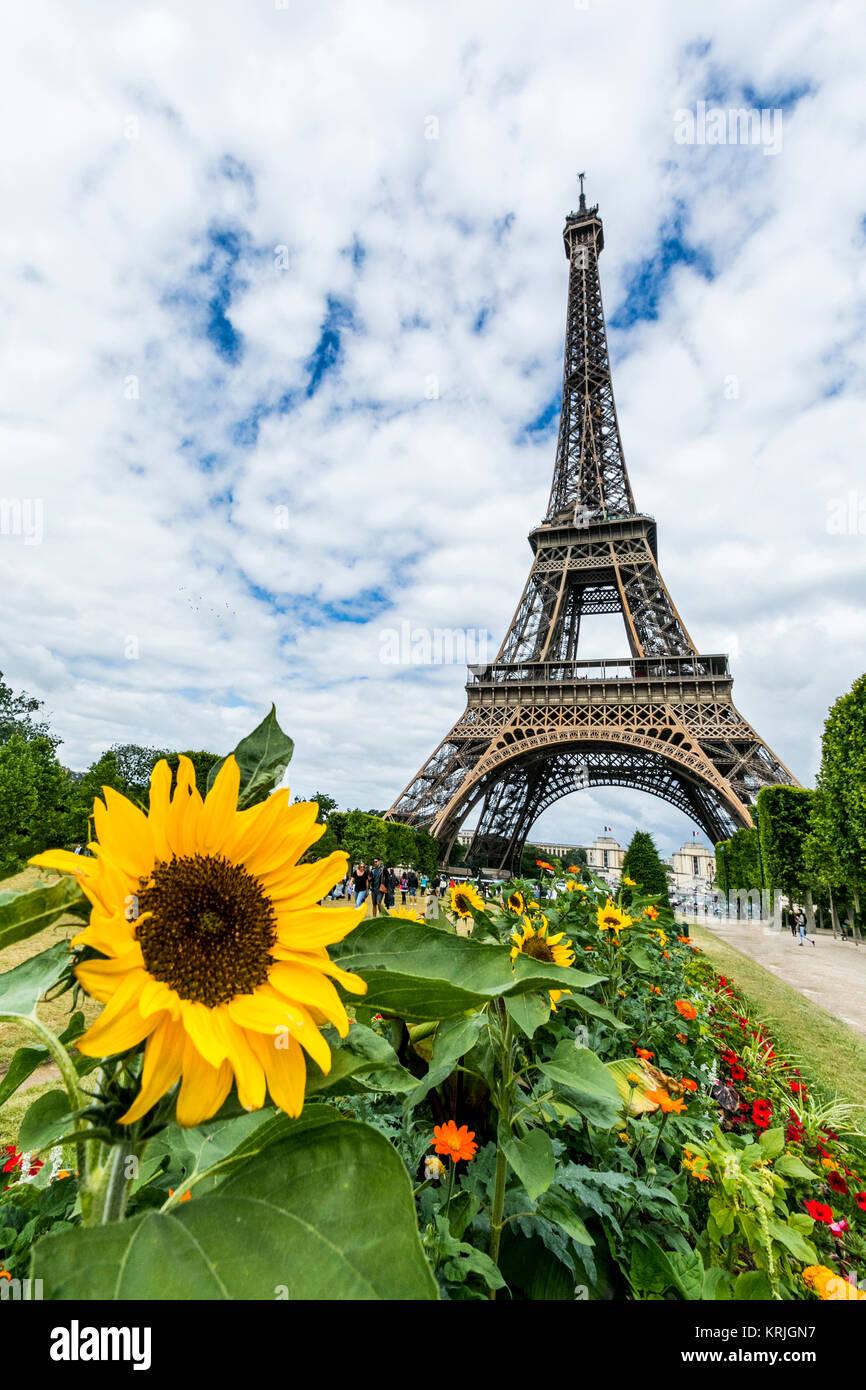 Row of flowers near Eiffel Tower, Paris, Ile de France, France - Stock Image