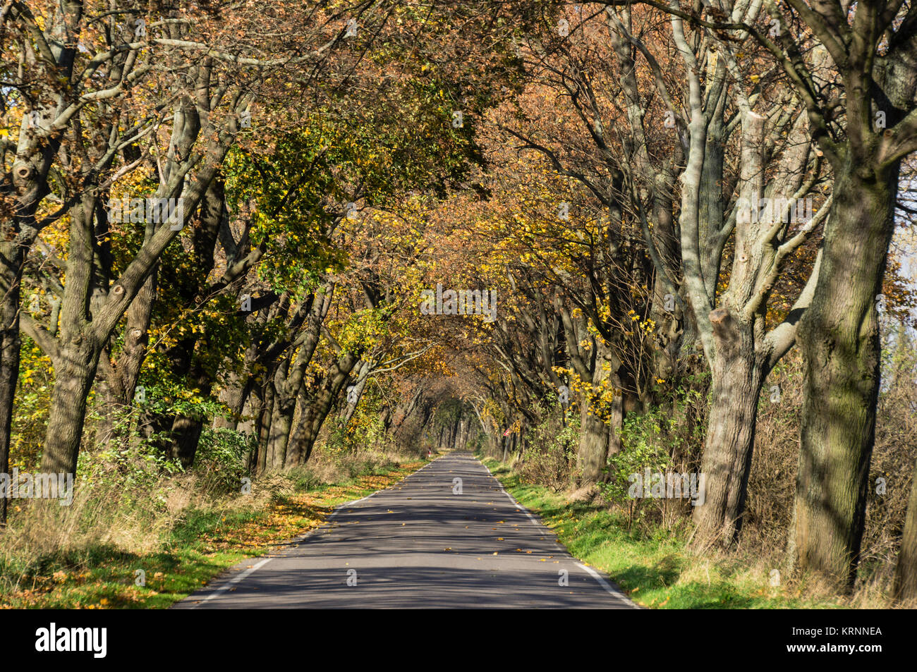 Alley in autumn,  , Brandenburg, Germany - Stock Image