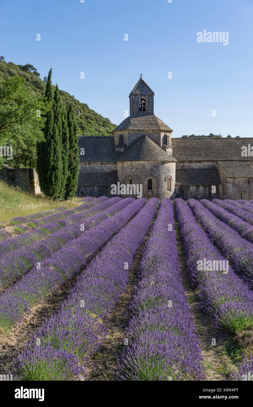 Abbey of Notre Dame of Senanque, Gordes, Provence-Alpes-Cote d'Azur, France - Stock Image