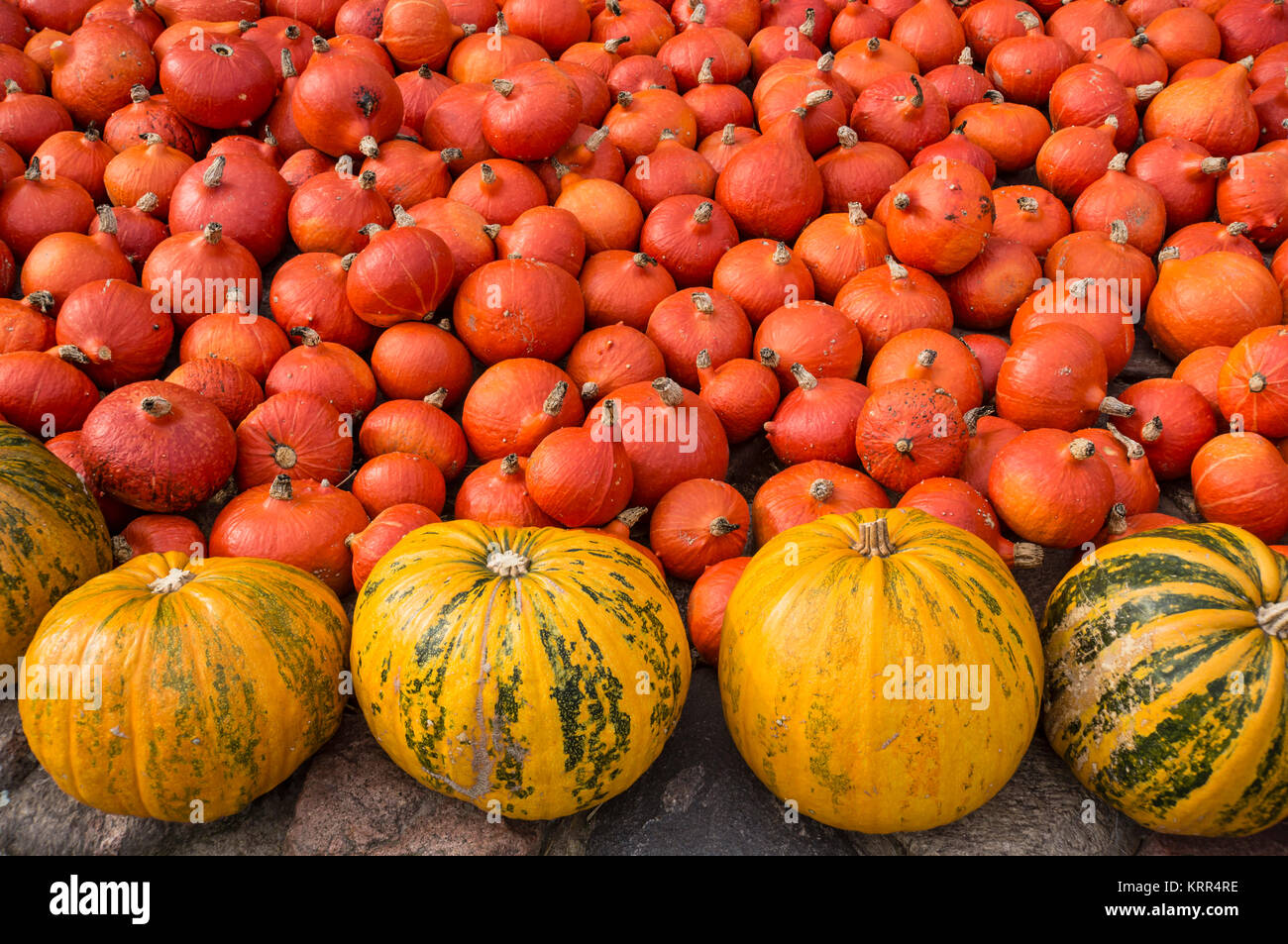 Pumkins, Autumn, Klaistow, Brandenburg, Germany - Stock Image