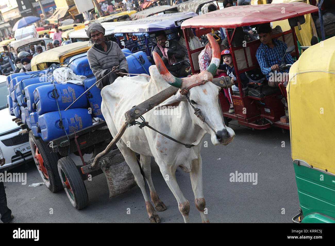 A bullock cart and driver in congested traffic in Chandni Chowk, New Delhi, India - Stock Image