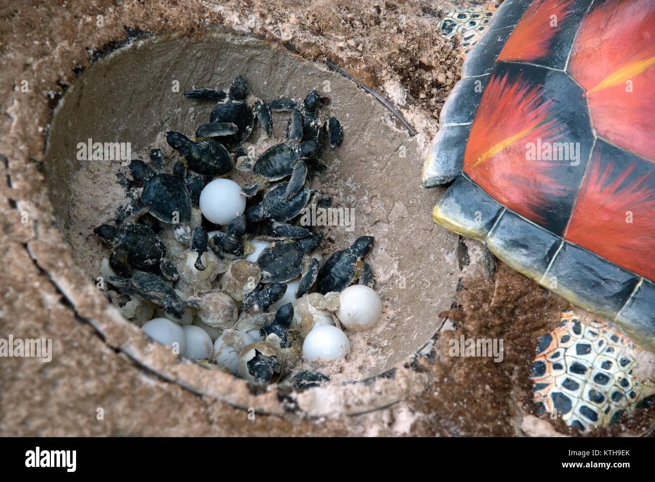 Sea Turtle Nest Hatching Stock Photos & Sea Turtle Nest ... - photo#41
