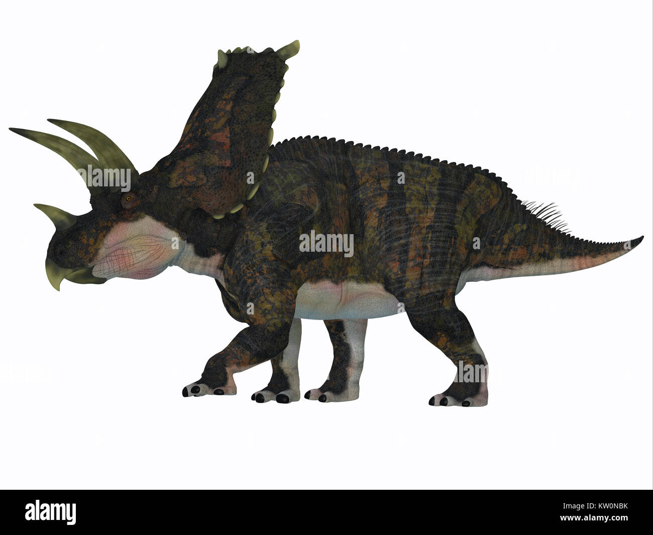 Bravoceratops Dinosaur Side Profile - Bravoceratops was a herbivorous ceratopsian dinosaur that lived in Texas, - Stock Image