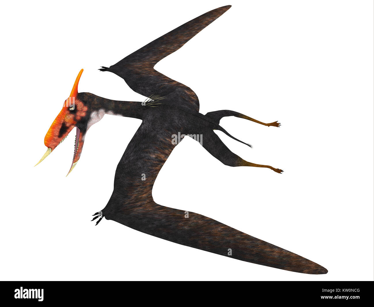Dsungaripterus Reptile Side Profile - This carnivorous pterosaur lived in China in the Cretaceous Period and preyed - Stock Image