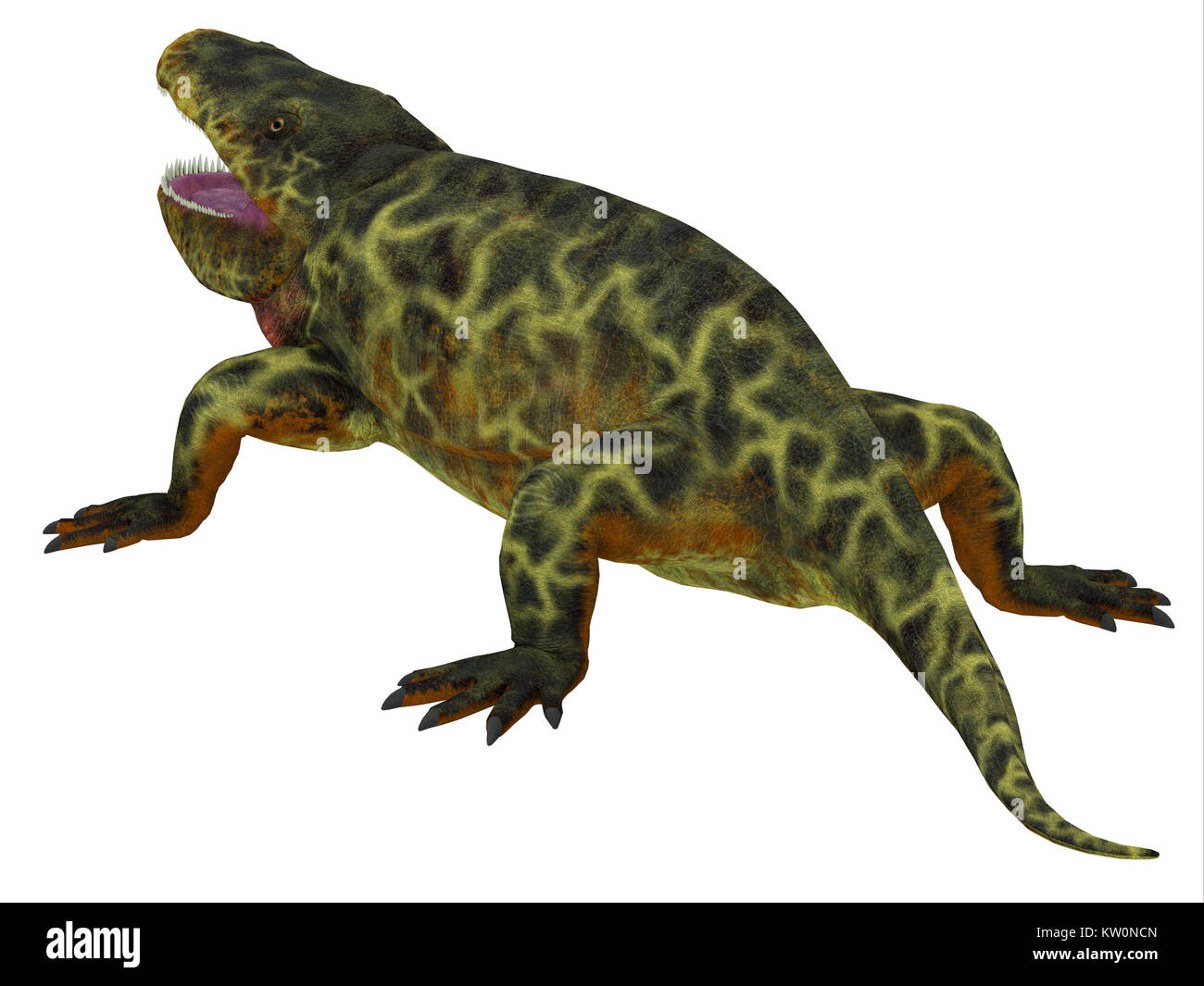 Eryops Dinosaur Tail - Eryops was an semi-aquatic ambush predator much like the modern crocodile and lived in Texas, - Stock Image