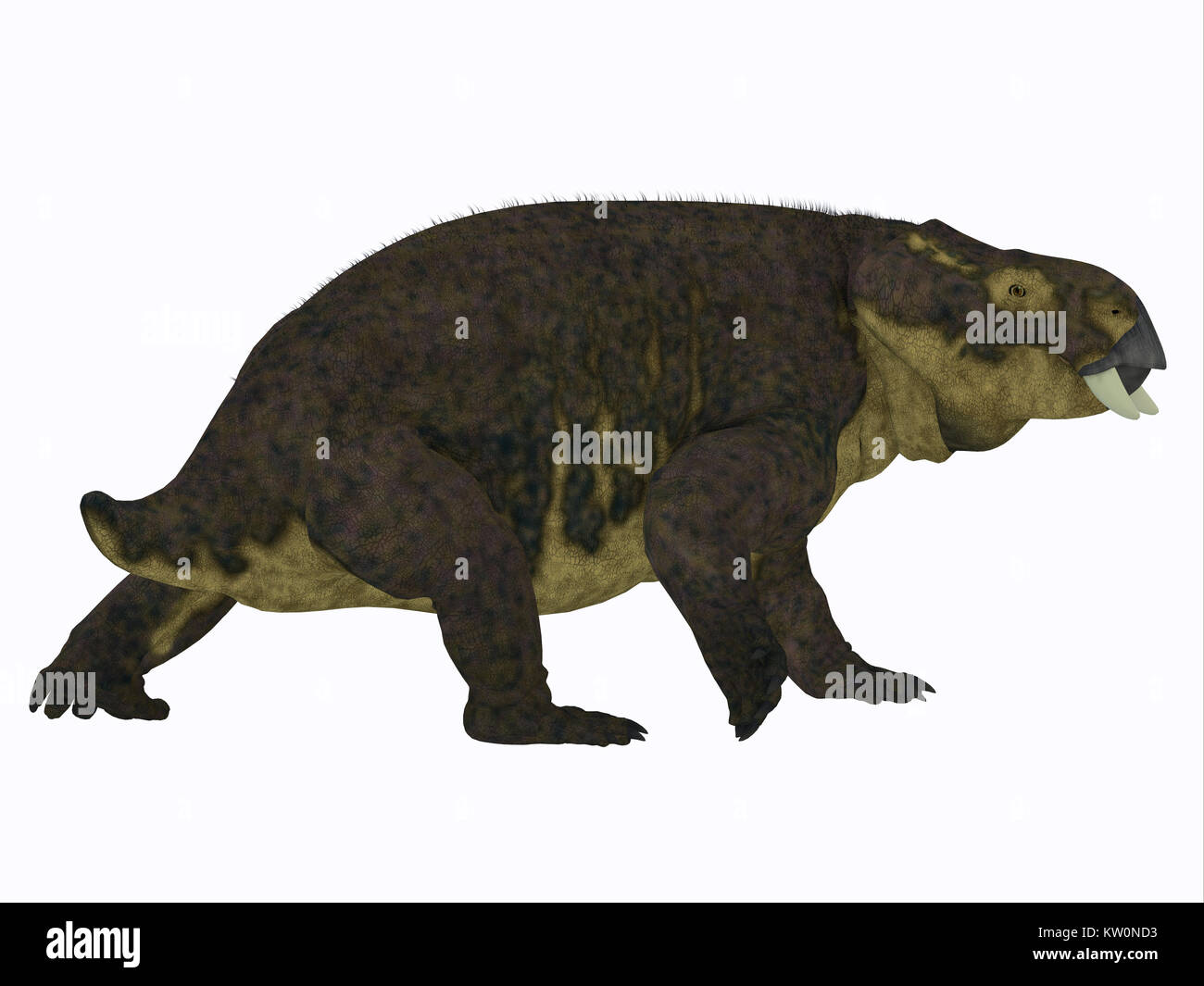 Placerias Dinosaur Tail - Placerias was a herbivorous dicynodont dinosaur that lived in Arizona, USA in the Triassic - Stock Image