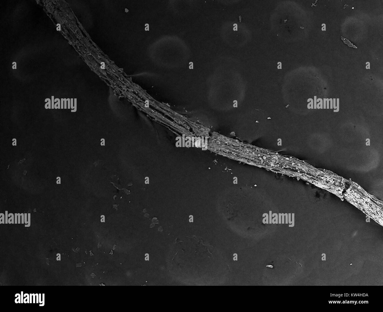 images made with electron microscope