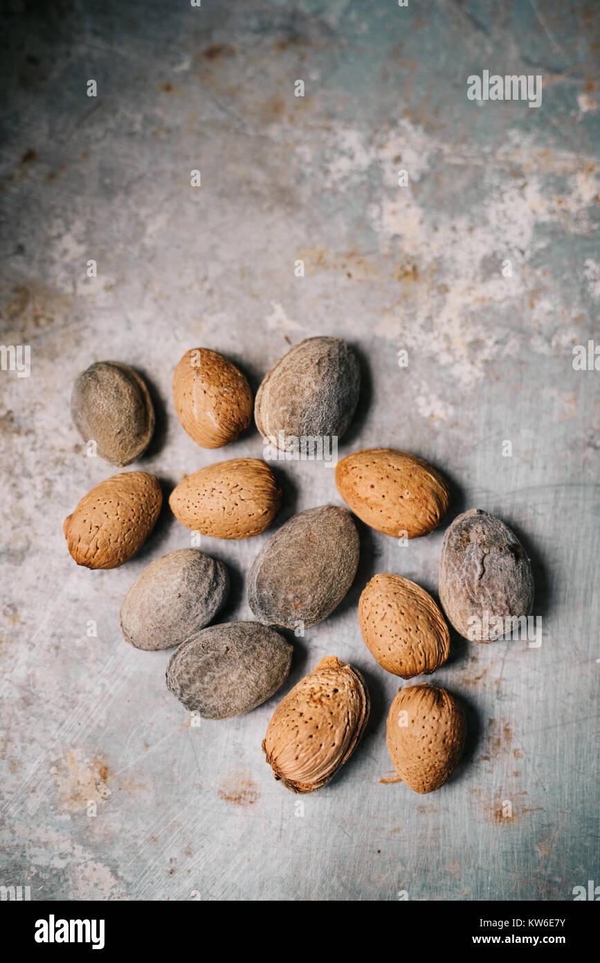 Unpeeled almond on metal surface - Stock Image