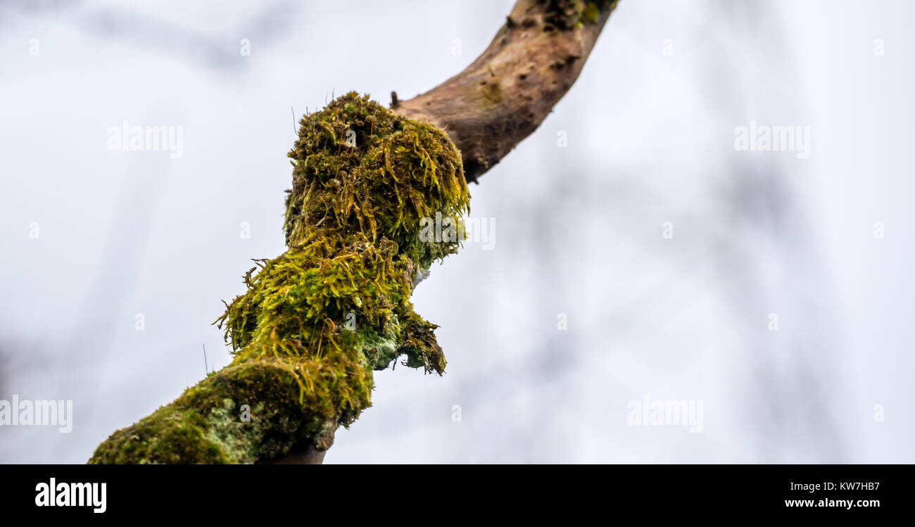 close-up-of-lichen-covered-tree-branch-i