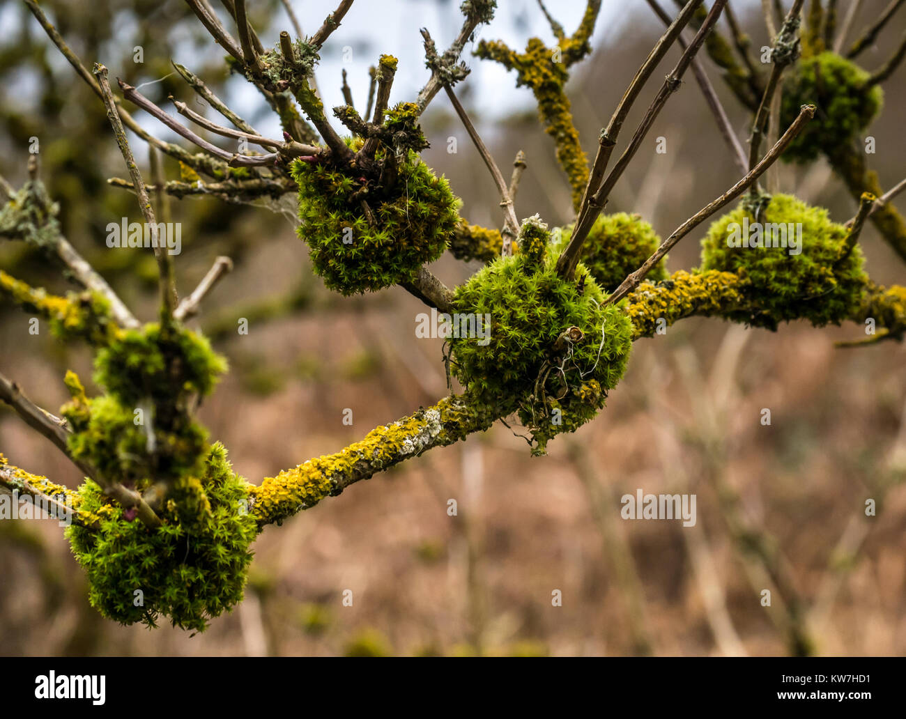 close-up-of-mossy-lichen-covered-tree-br