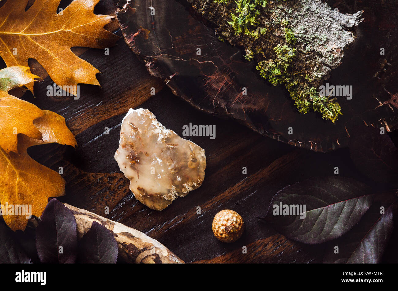 A Collection of Fallen Leaves, Moss, Bark, and Agate - Stock Image
