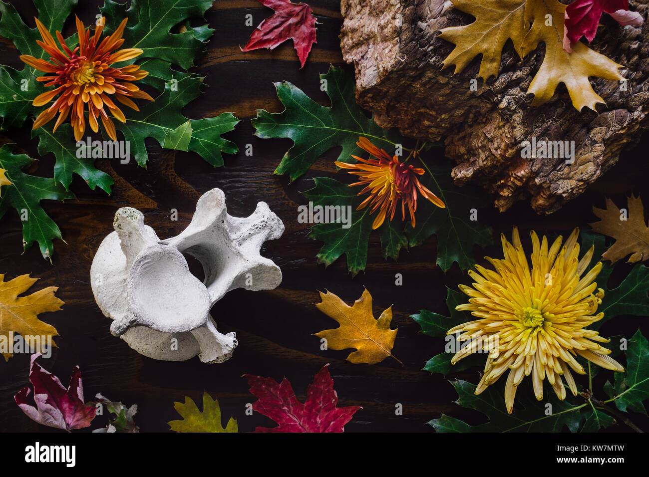 A Collection of Fallen Leaves, Bark, Chrysanthemum and Animal Vertibrae - Stock Image