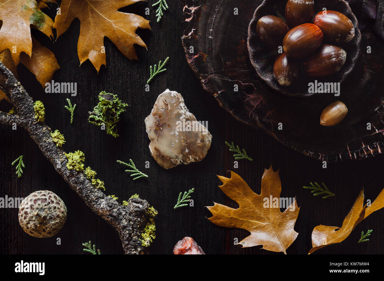 Fall Leaves, Moss, Bark, Agate, Petrified Wood on Dark Table - Stock Image