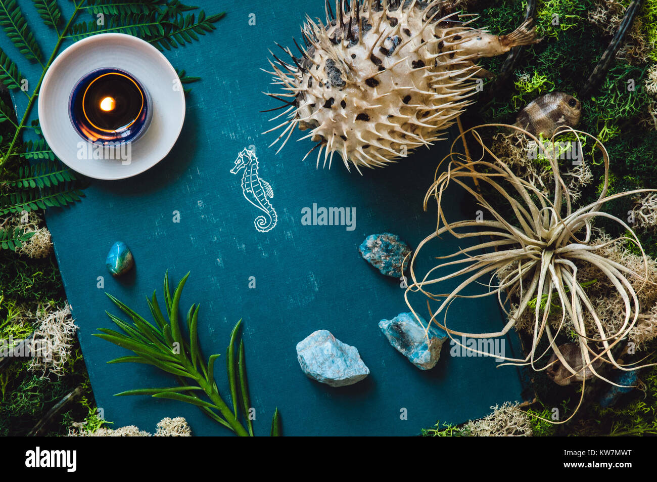 Taxidermy Puffer Fish with Moss and Blue Apatite Stones - Stock Image