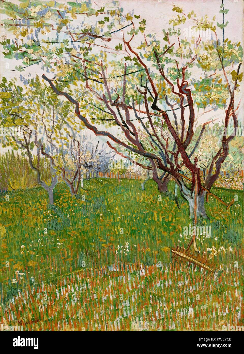The Flowering Orchard, by Vincent Van Gogh, 1888, Dutch Post-Impressionist, oil on canvas. The angular branches - Stock Image
