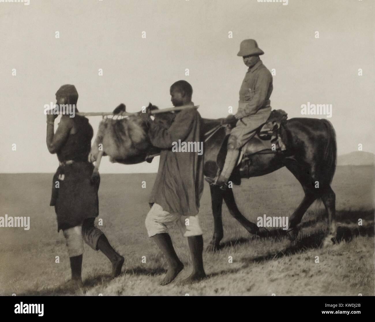 Theodore Roosevelt rides beside African porters carrying an lion skin back to camp, June-Dec. 1909. It was collected - Stock Image