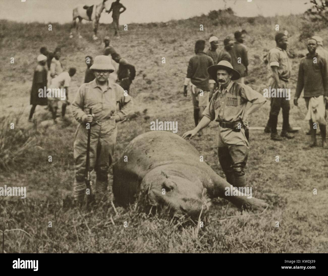Theodore Roosevelt and unidentified man standing over a killed hippopotamus. In the background are African workers - Stock Image