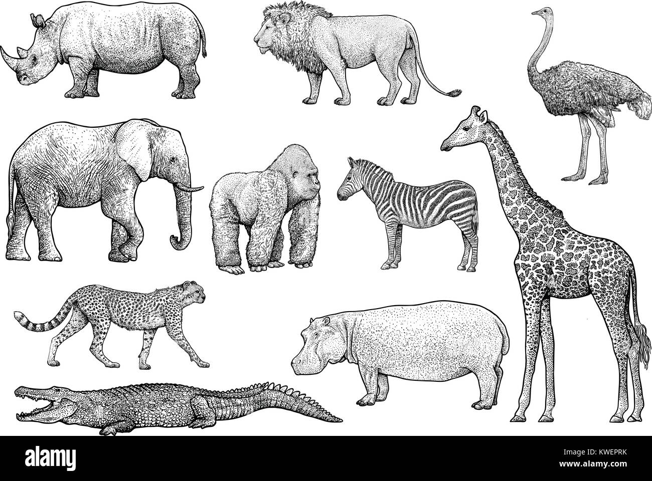Line Drawings Of African Animals : Lion and elephant stock photos