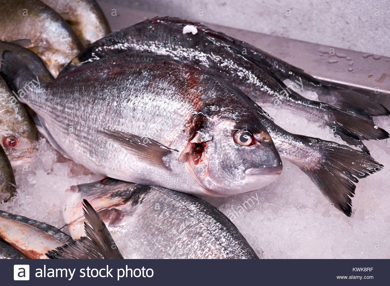 fresh-sea-bream-for-sale-at-a-local-fish