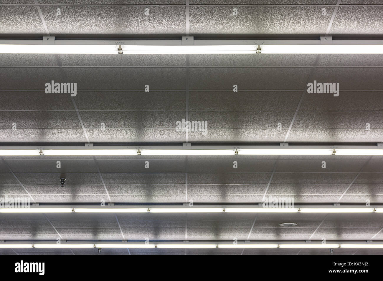 Female warehouse lighting bulbs