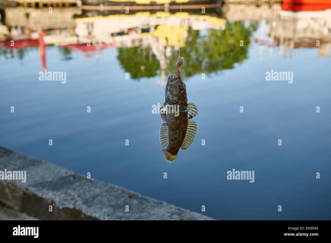 Hook worm stock photos hook worm stock images alamy for Fishing worms near me
