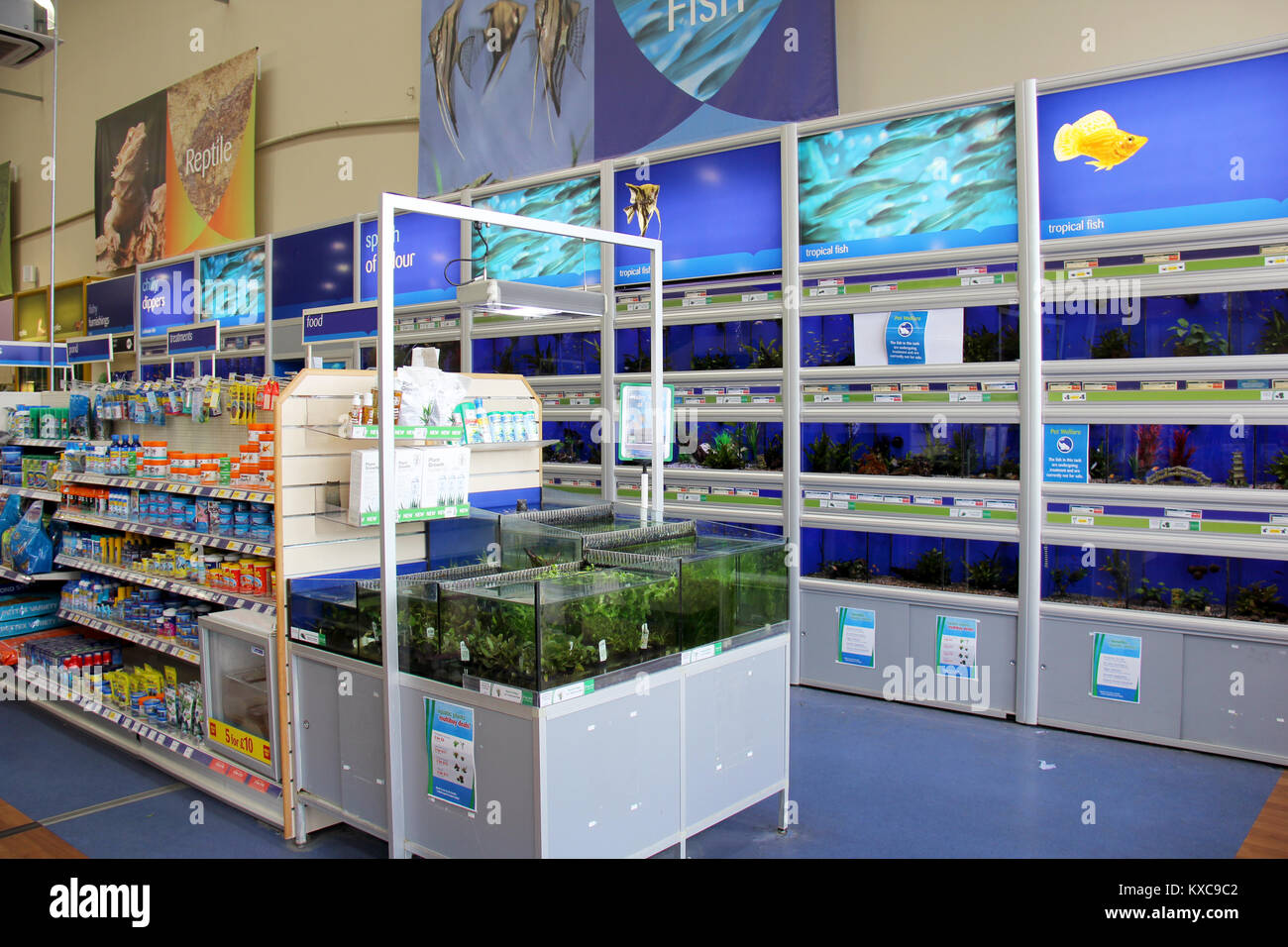 Pet store fish tanks stock photos pet store fish tanks for Pet stores that sell fish