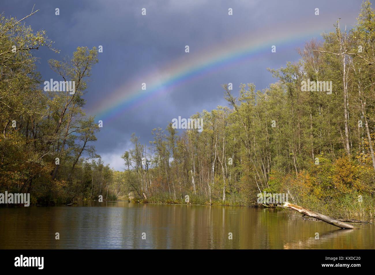 Erlenbruchwald forest with rainbow, Mecklenburg Lake District, Mecklenburg-Western Pomerania, Germany - Stock Image