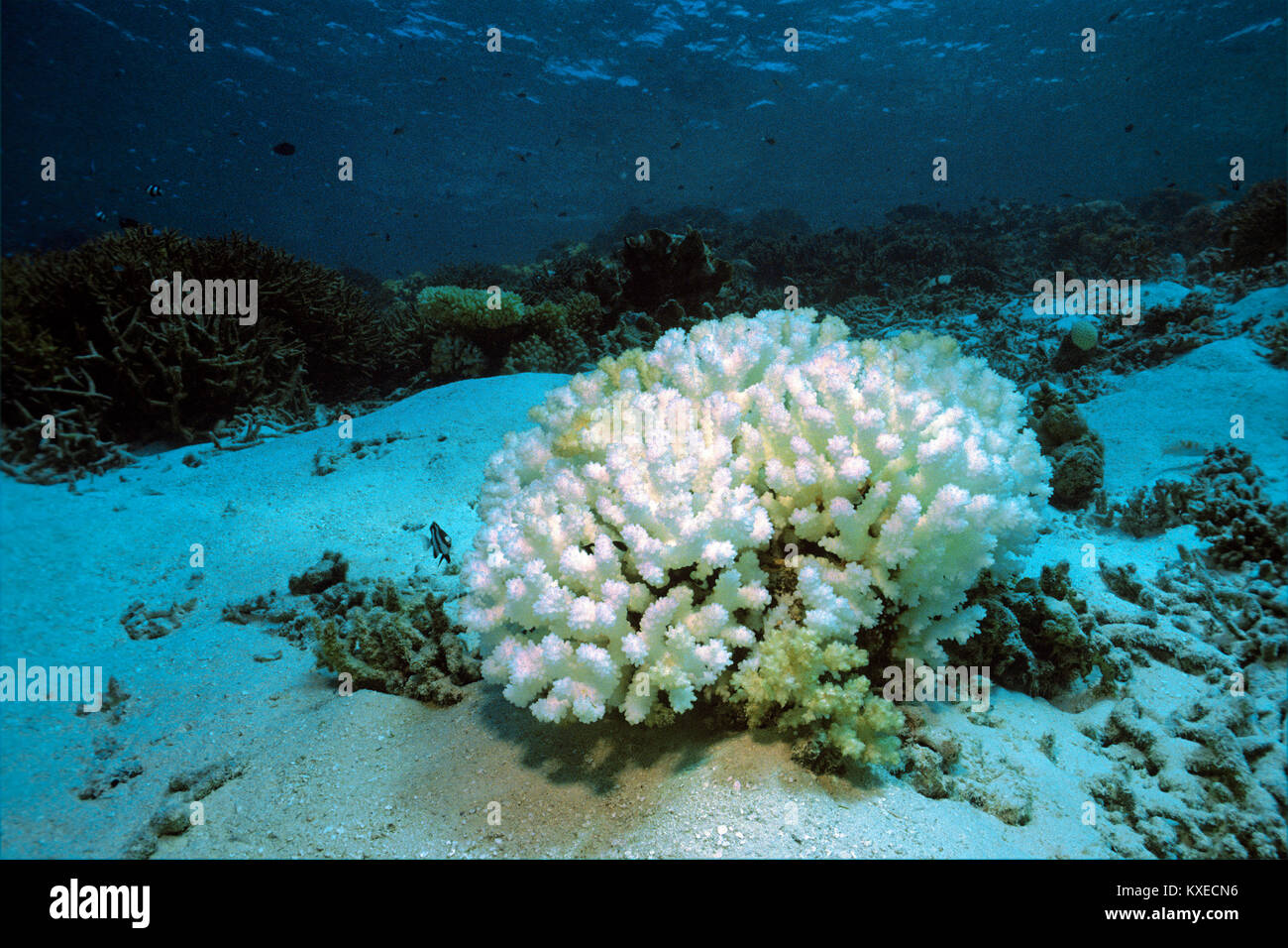 how to stop coral reef destruction