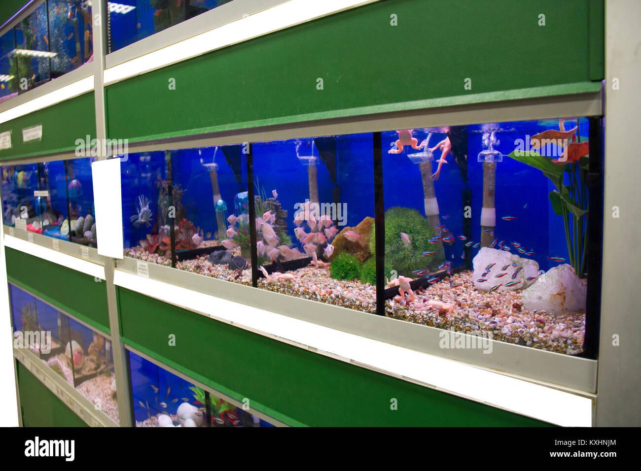 Pet store fish tanks stock photos pet store fish tanks for Pet supermarket fish tanks