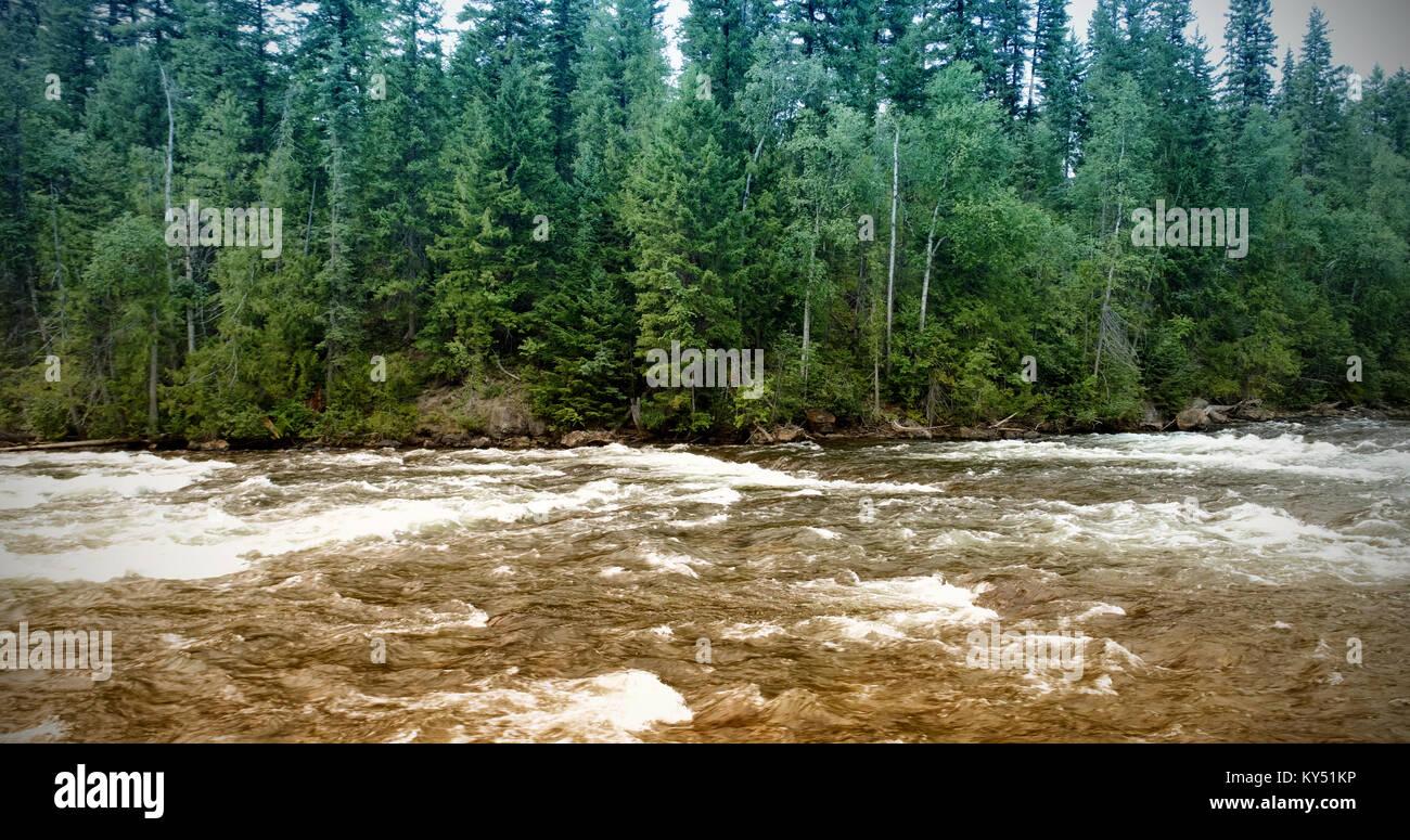 Violent river in forest - Stock Image