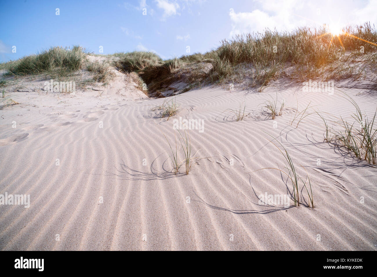 Beach shaped by the wind on a Scandinavian shore in the sunrise in the summer - Stock Image