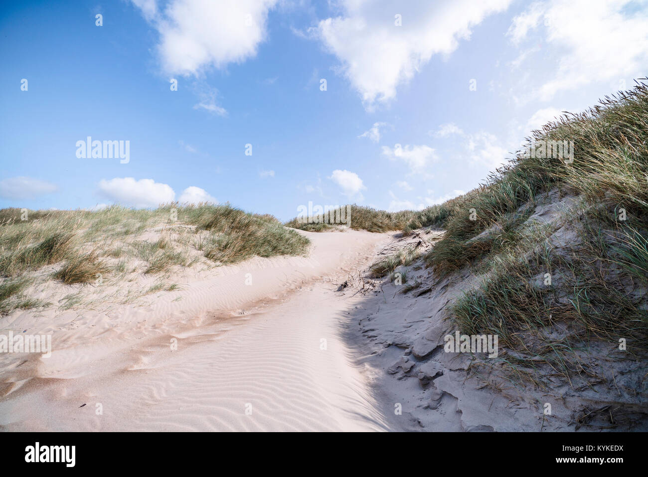 Trail on a Scandinavian beach with lyme grass in the summer under a blue sky with white clouds - Stock Image