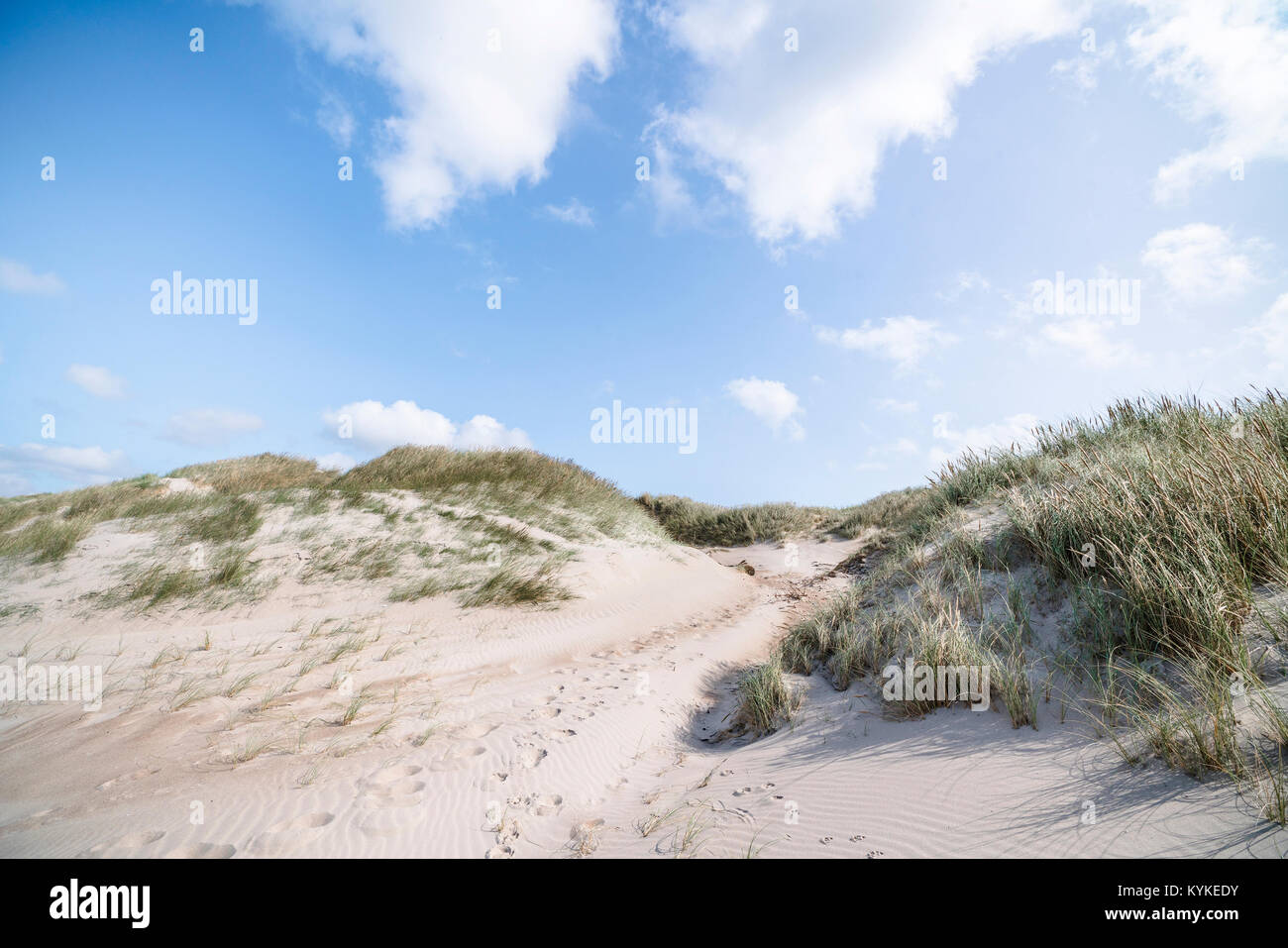 Beach dunes on a Scandinavian beach in the summer with lyme grass under a blue sky - Stock Image