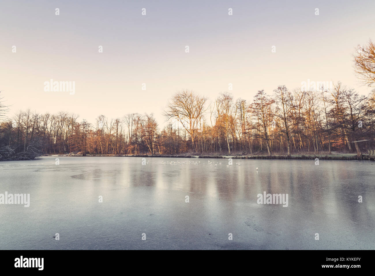 Trees around a frozen lake in the winter with birds looking for food in the morning - Stock Image